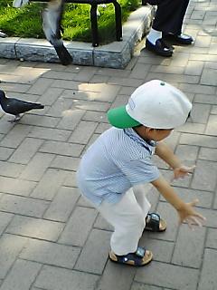 鳩を追い掛ける遼太郎
